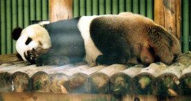 Panda0824