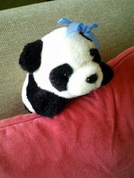 Panda080829d