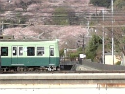 Sakura200635a