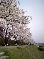 Sakura200651s