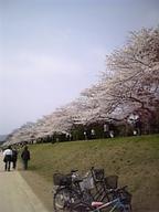 Sakura200652s