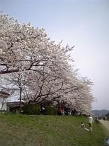 Sakura200653s