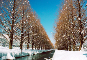 makino_winter2006a