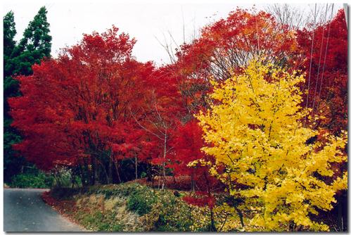 今年の秋は(2006年)