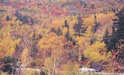 乗鞍高原は秋まっさかり