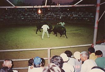 石垣島の闘牛