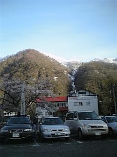 桜の向こうは樹氷です