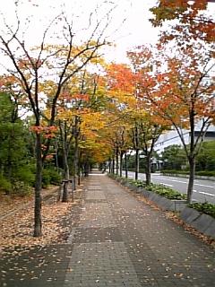 大阪南港も秋が深まって来ました