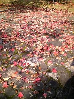 秋ですなあ