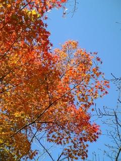 出かけます。晩秋の京都へ