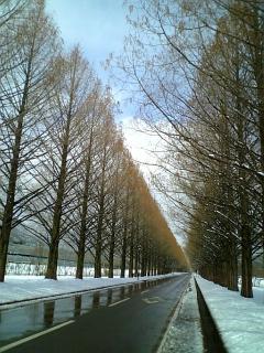 初冬の並木道
