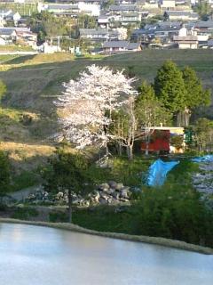 今朝の桜(2010/4/8<br />  のようす)
