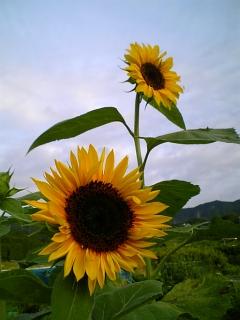 夏の朝          #shiga #otsu