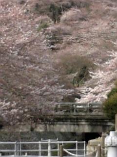 Sakura200617a
