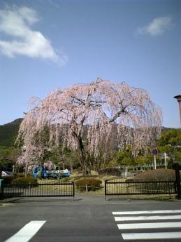 Shidare200604a